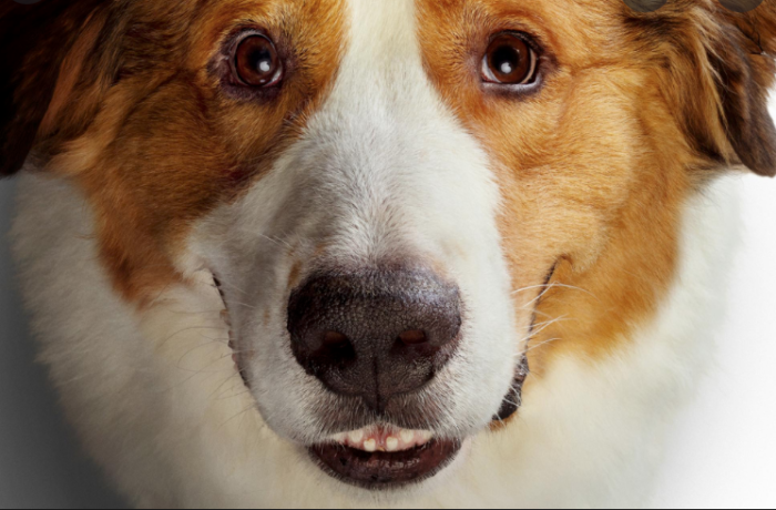 MOVIE REVIEW: A DOG'S JOURNEY